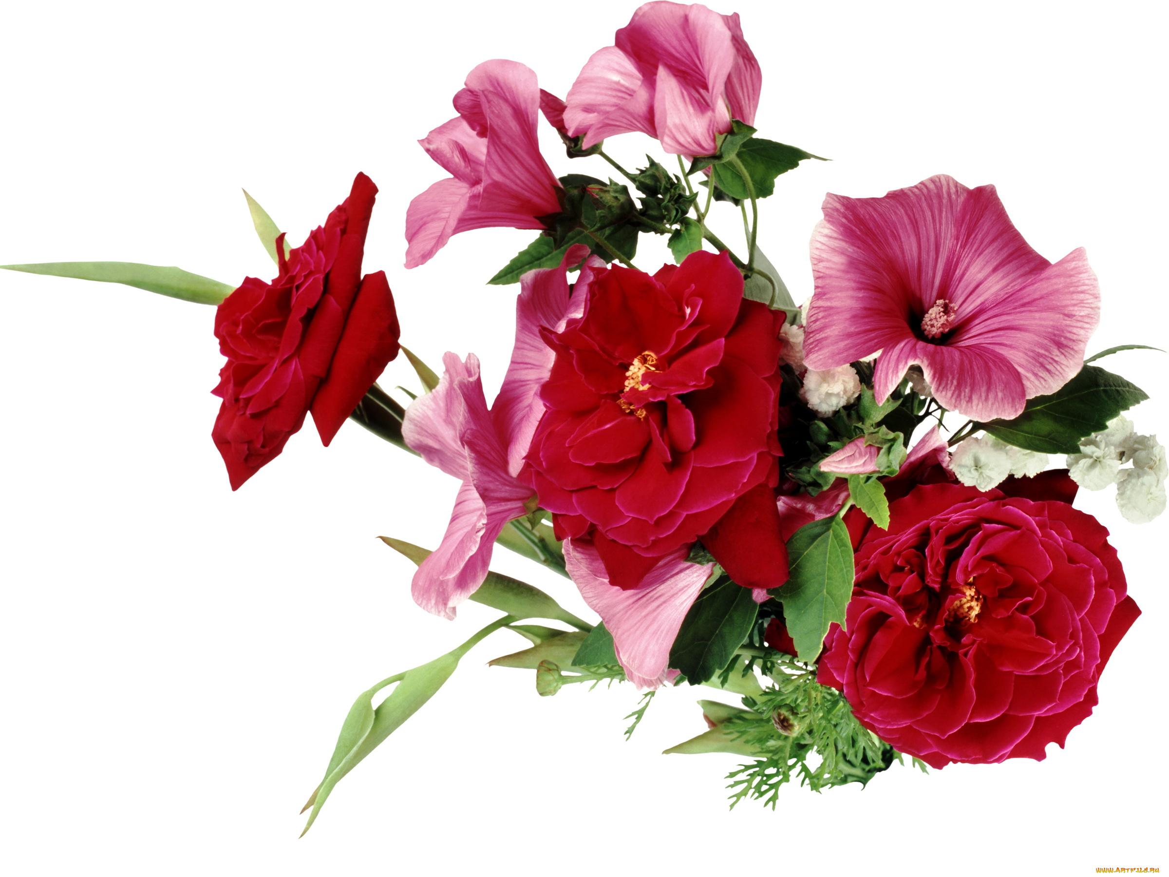 Кривого рога, картинки розы для замечательного человечка