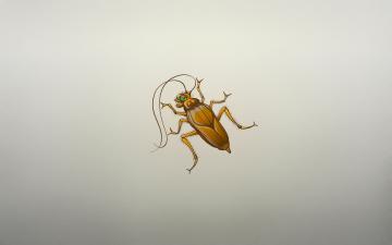 Картинка рисованные минимализм усы таракан