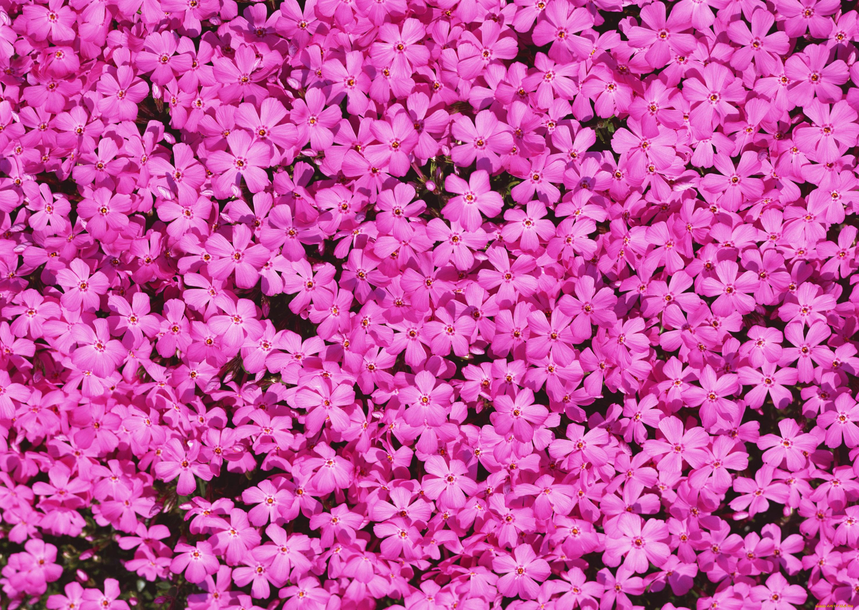 Открытка, картинки с цветами на телефон