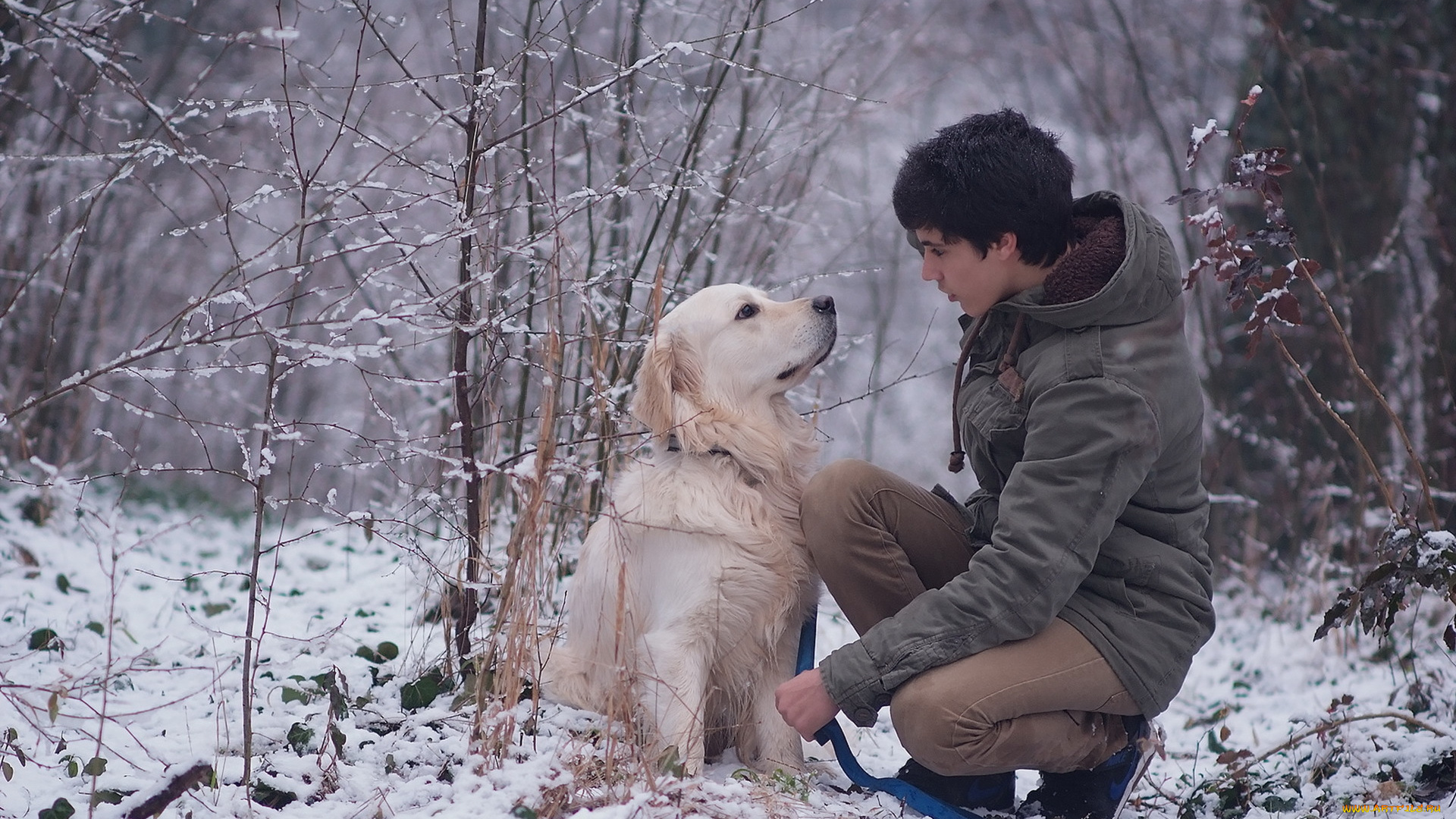 фотосессия с собакой для мужчины Новый год