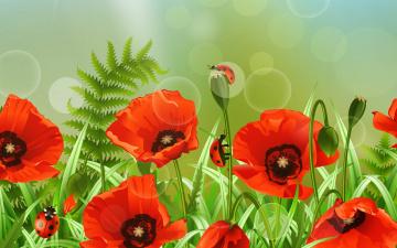Картинка векторная+графика цветы+ flowers цветок лето поле божья коровка маки