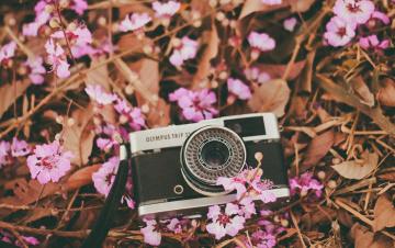 обоя бренды, olympus, цветы, фотоаппарат, розовые