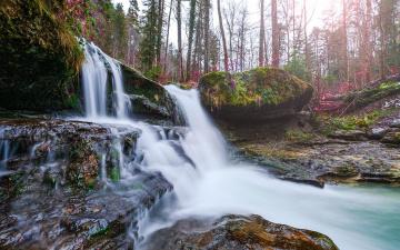 Картинка природа водопады лес водопад деревья