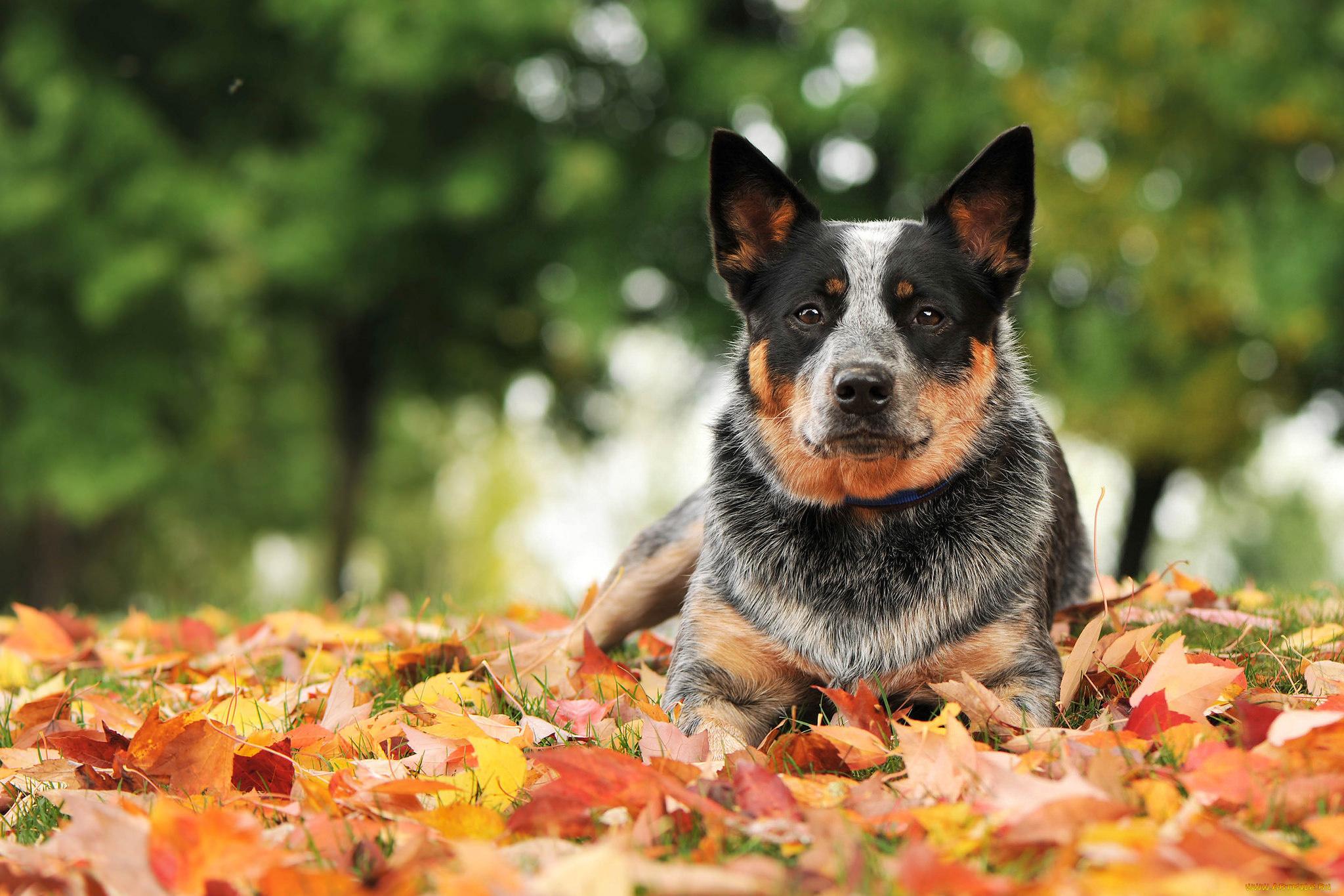 Собака лист без смс