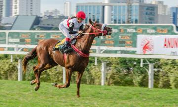 Картинка jockey+club+de+s& 227 o+paulo спорт конный+спорт скачки жокей лошадь ипподром