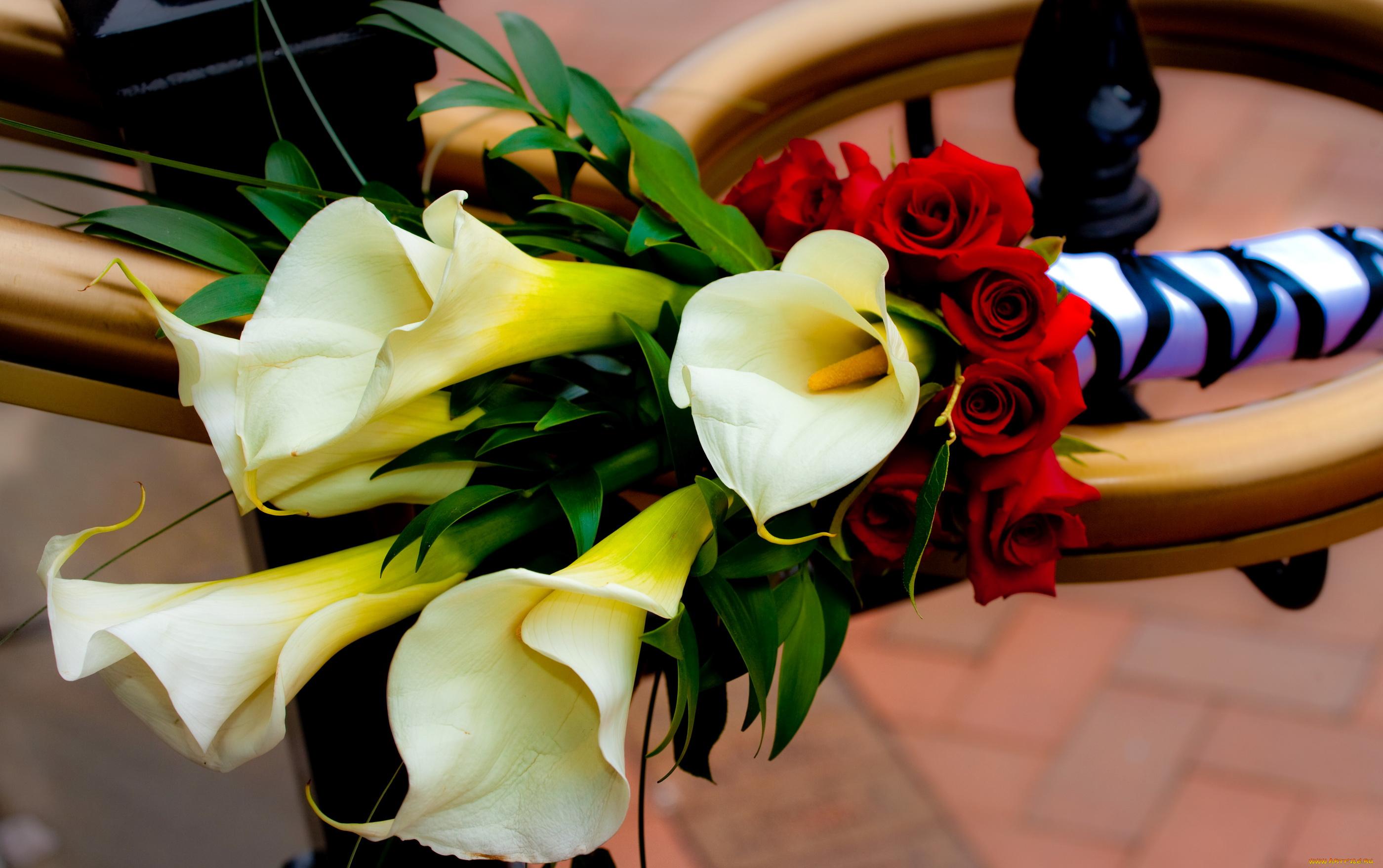 Букеты цветы каллы фото, очень красивые