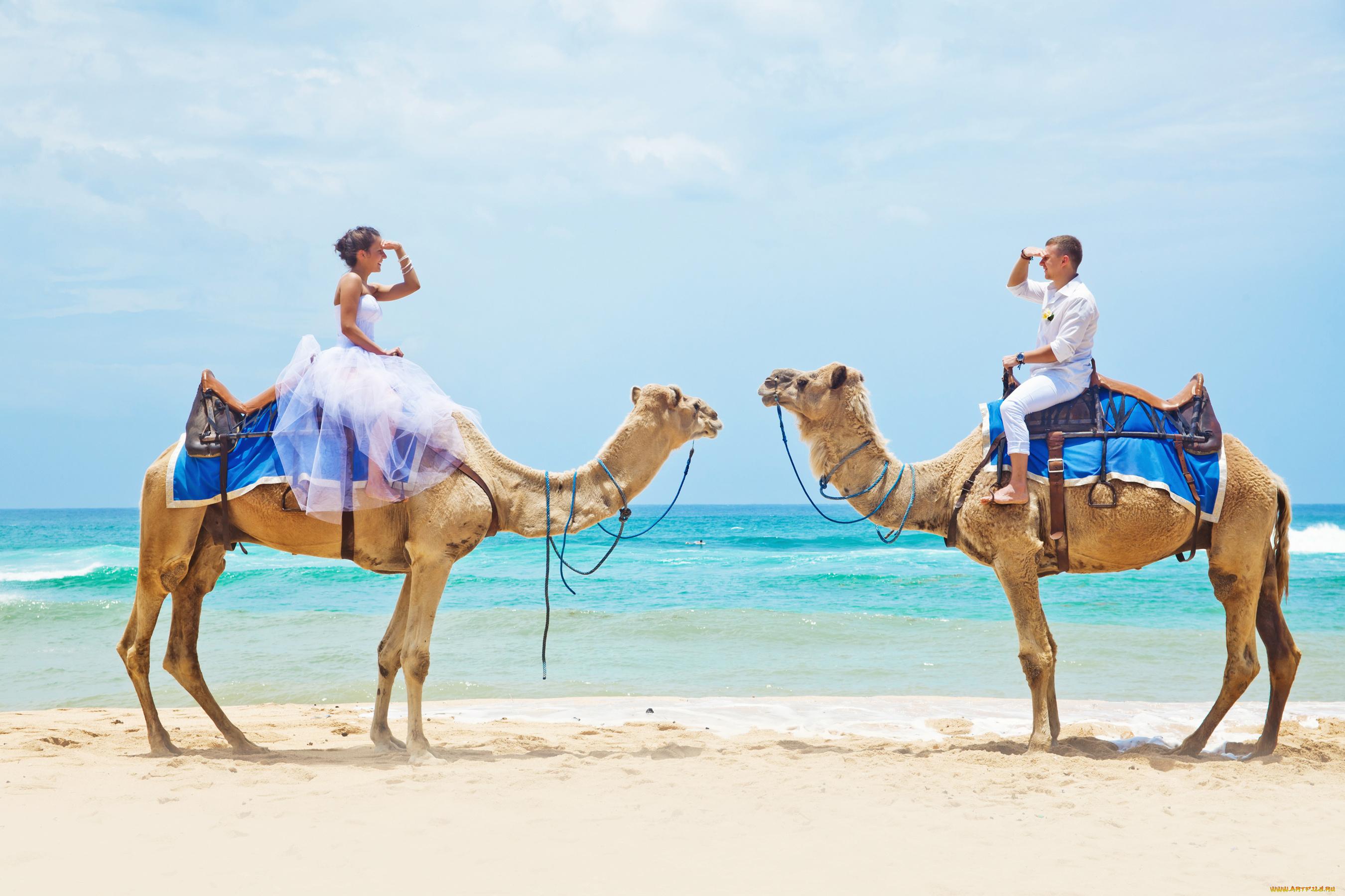 Смешные картинки толстая женщина на верблюде