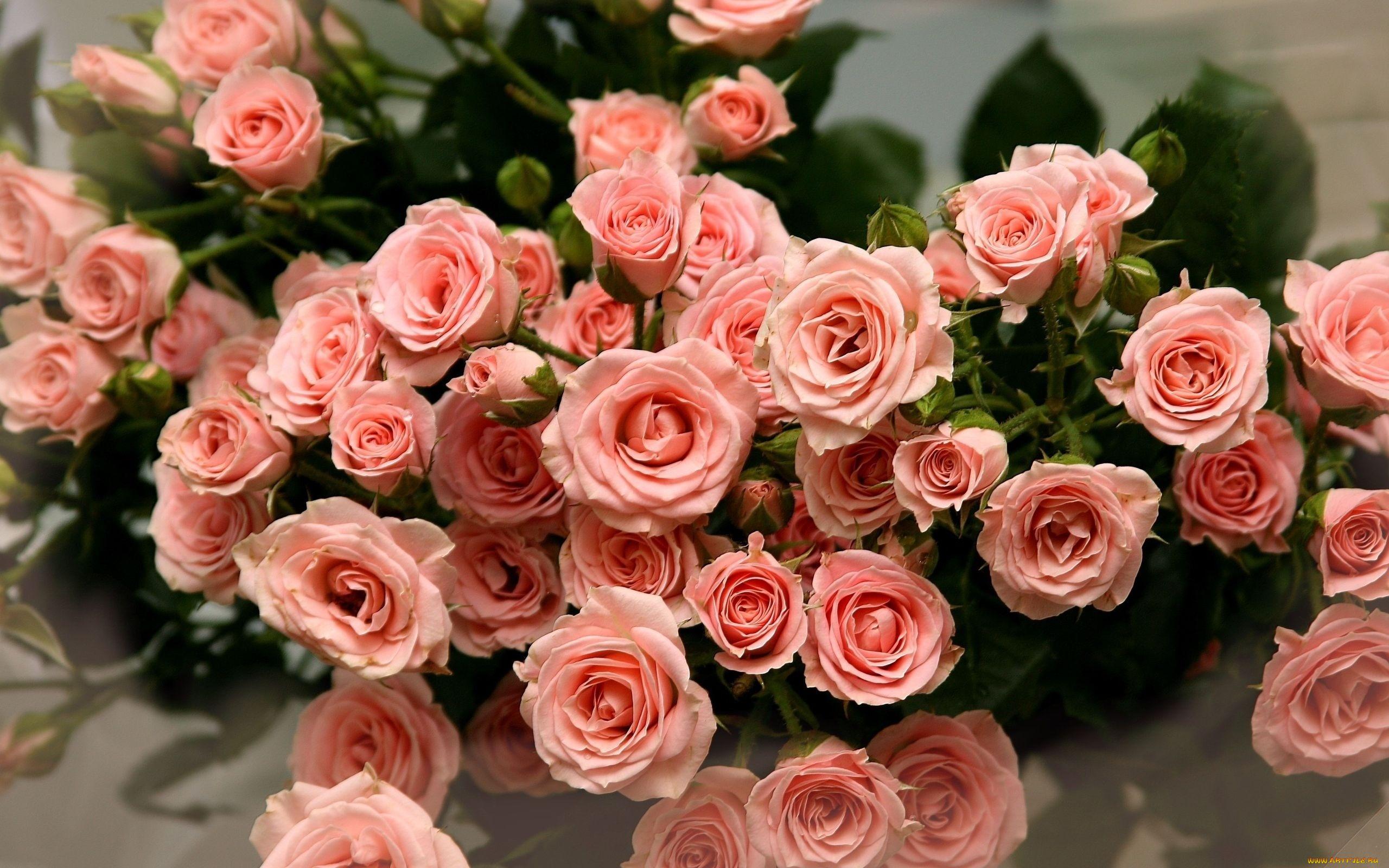 Поздравление днем, цветы картинки на телефон с ютуба