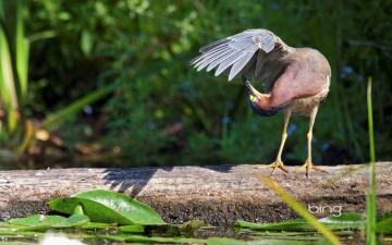 Картинка животные цапли крило птица