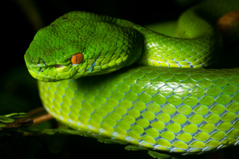 Зеленая змея макро без смс
