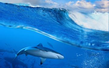 Картинка животные акулы sky sea blue ocean wave splash океан море волна вода