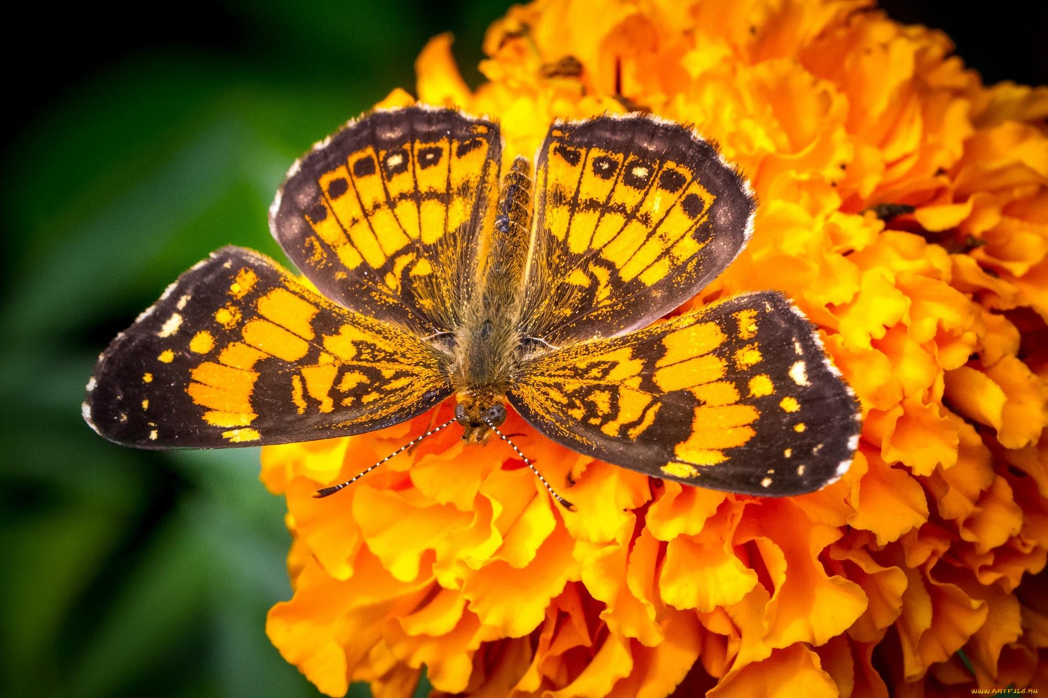 Желтая бабочка на оранжевых стеблях без смс