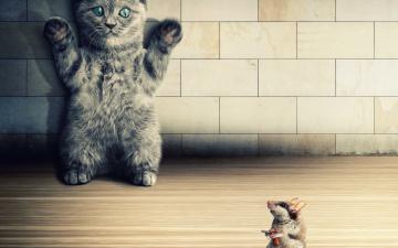 обоя юмор и приколы, мышь, кот, пистолет