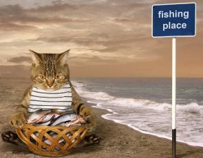 обоя юмор и приколы, кот, улов, рыба