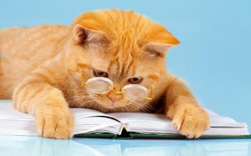 обоя юмор и приколы, лапы, лежит, читает, юмор, кот, фон, рыжий, книга, умный, очки