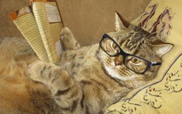 обоя юмор и приколы, очки, креатив, лежит, журнал, подушка, умный, юмор, кот, читает