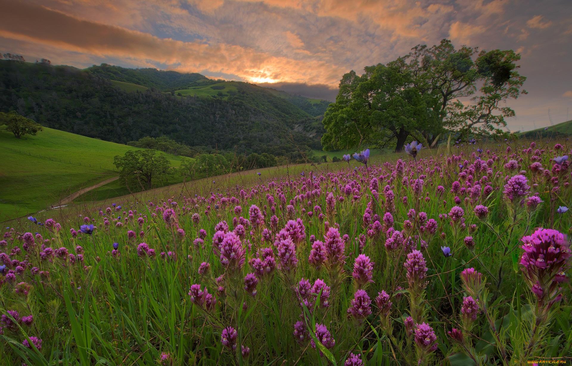 поляна цветы трава холмы горы glade flowers grass hills mountains  № 1829282 бесплатно
