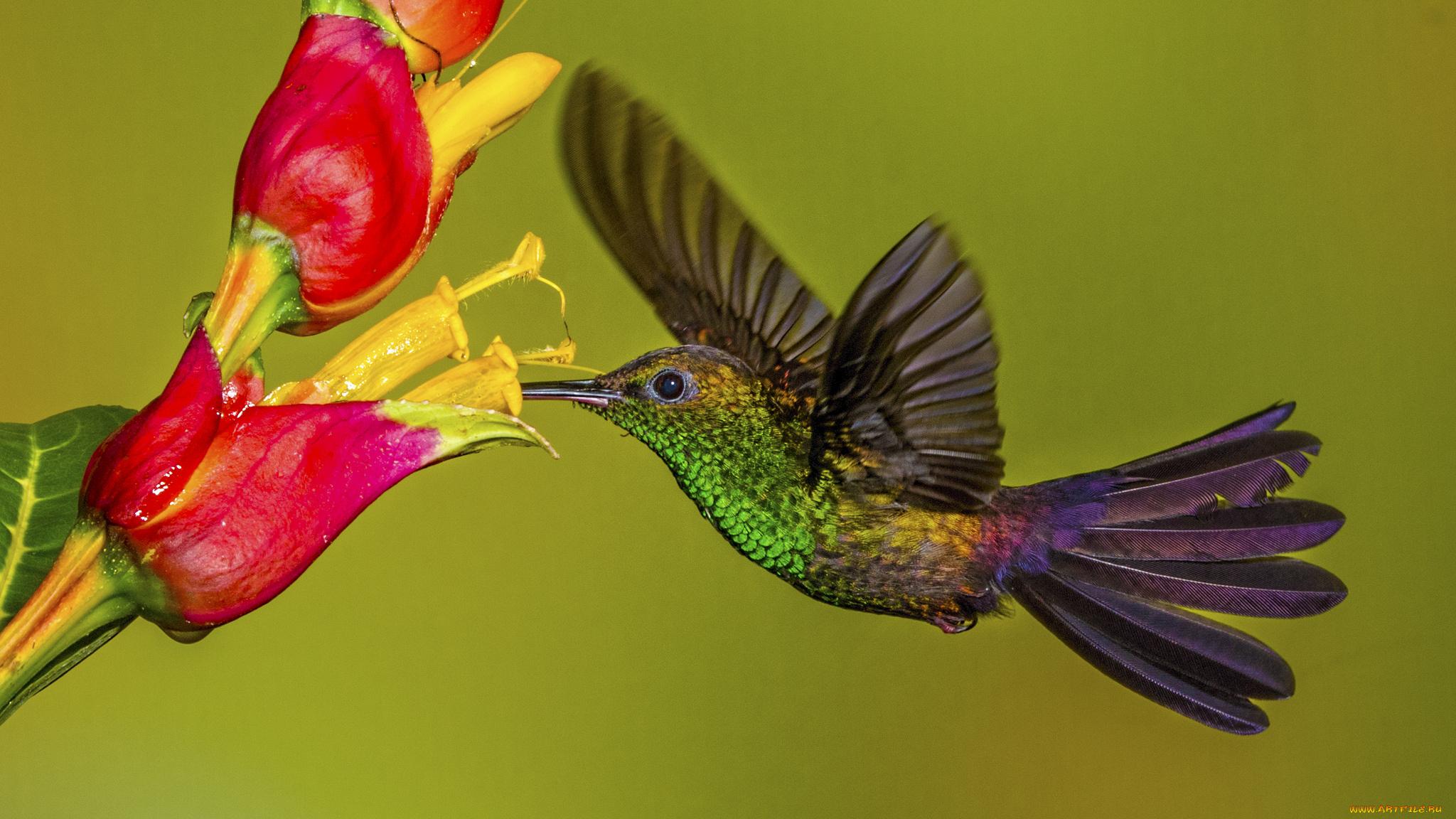 природа колибри цветы птицы загрузить