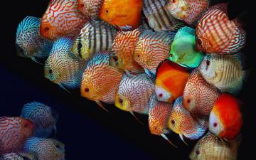 обоя животные, рыбы, рыбки