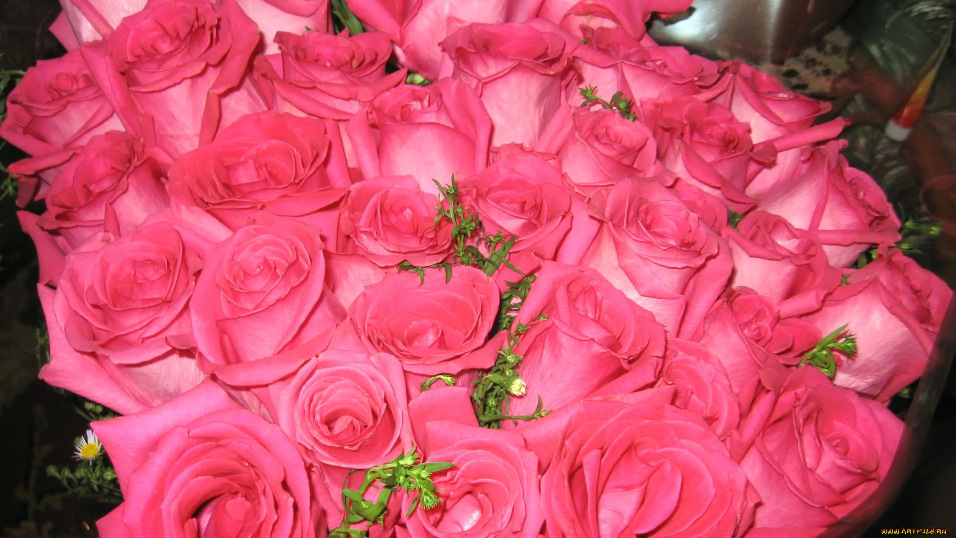 выбор открытки с изображением большого количества роз столовое серебро, ювелирные