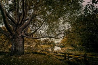 Картинка природа реки озера лес река изгородь