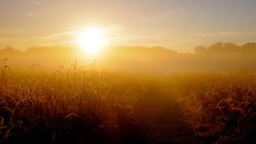 Картинка природа восходы закаты трава поле туман восход утро