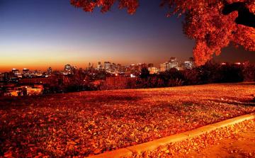 обоя города, - огни ночного города, панорама, листопад, парк, осень, огни