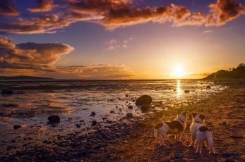 обоя животные, собаки, друзья, берег, закат