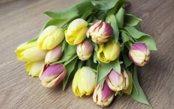 обоя цветы, букеты,  композиции, bouquet, flowers, тюльпаны, tulips