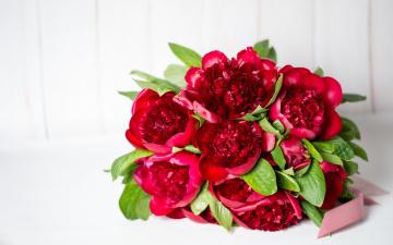 обоя цветы, пионы, красный, букет