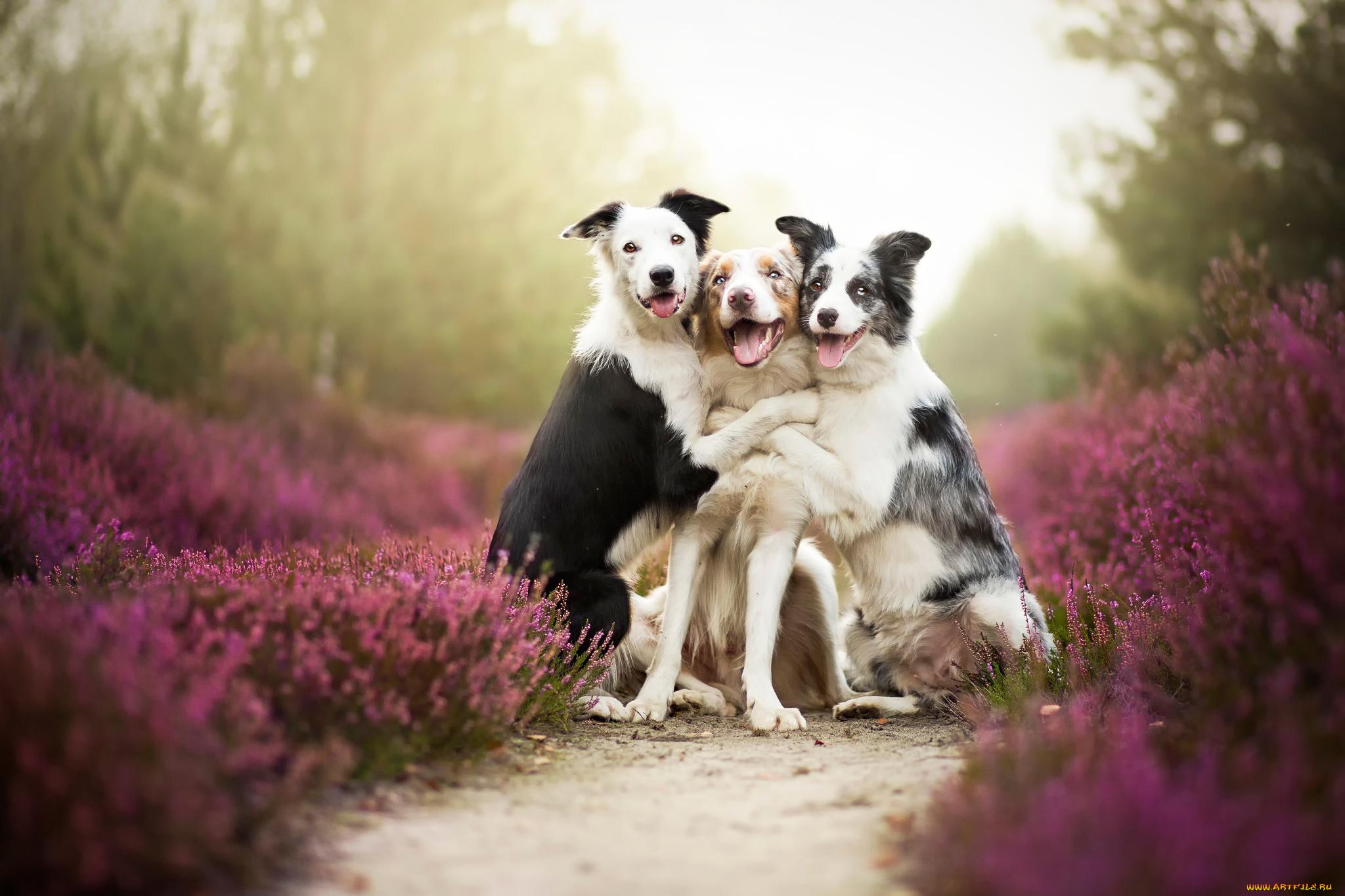 С днем друзей открытки с собаками
