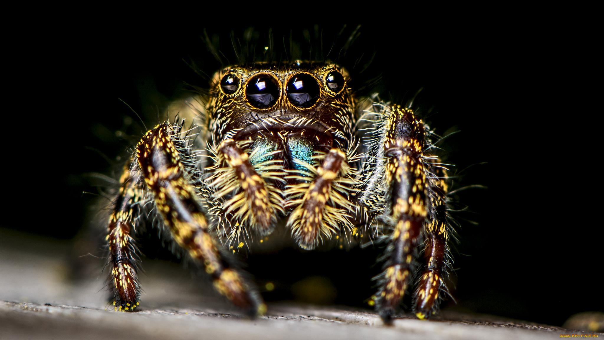 природа животные паук  № 2544206 загрузить