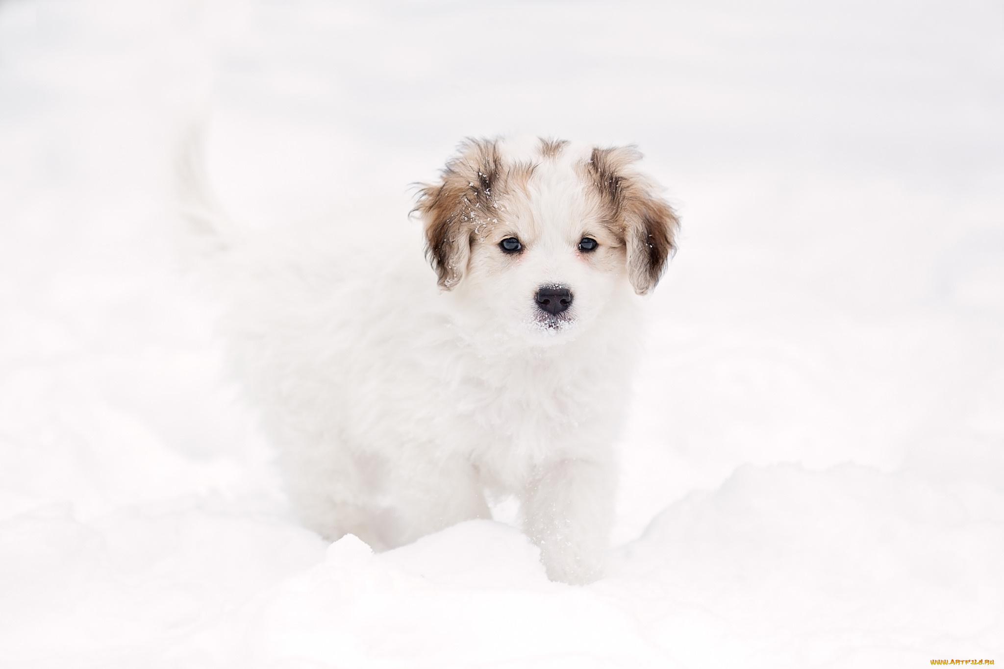 щенок снег puppy snow  № 2001770 без смс