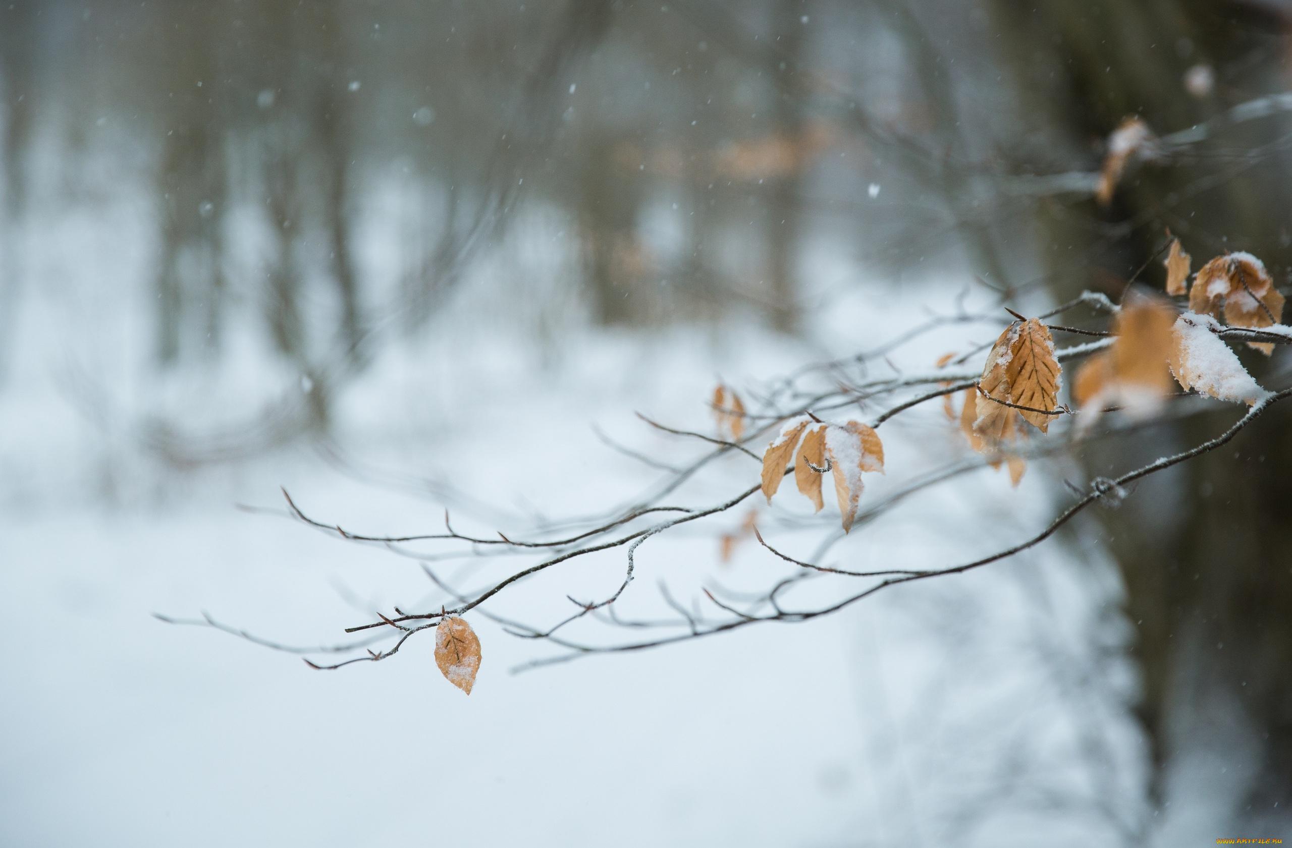 природа ветка снег  № 3089919 загрузить