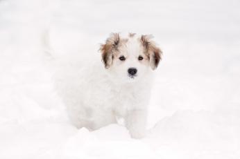 Картинка животные собаки собака снег