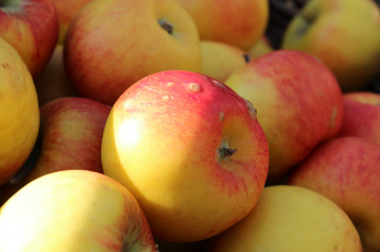 обоя еда, Яблоки, плоды