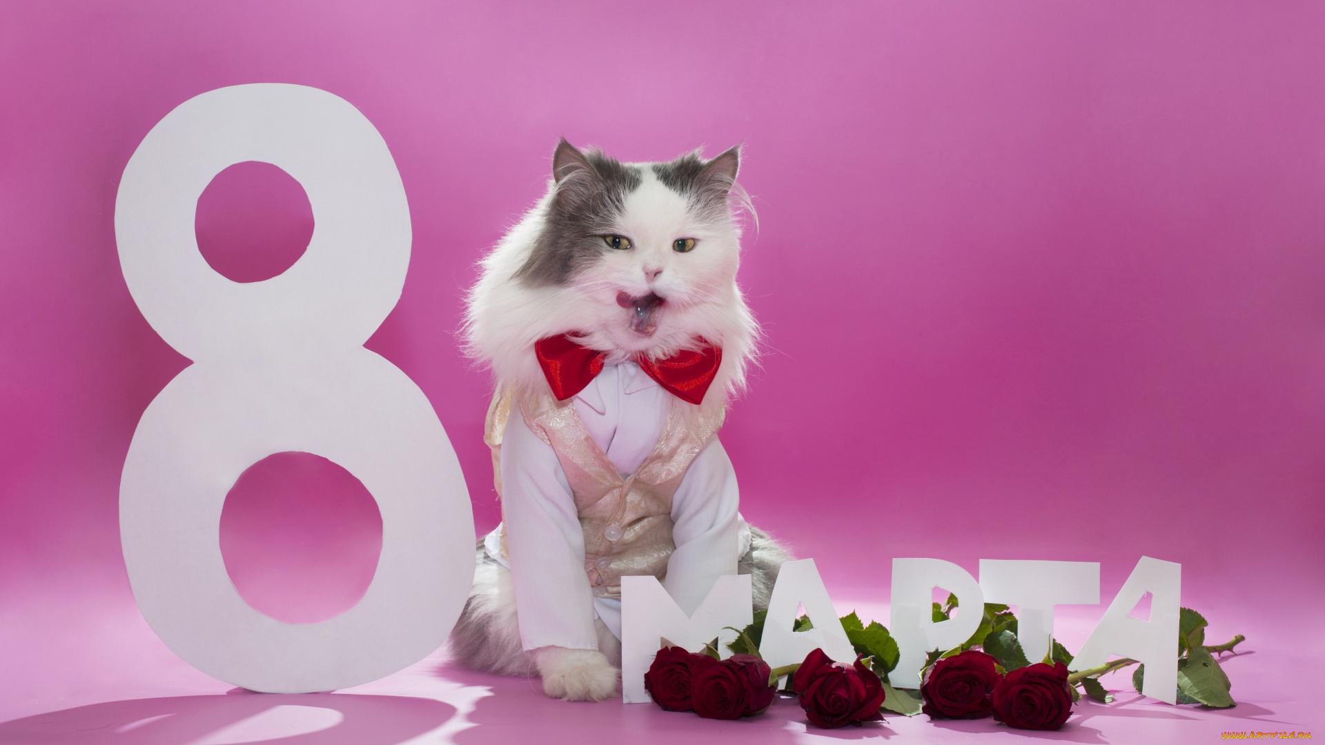 Кот в сапогах открытка 8 марта себестоимости, кроме