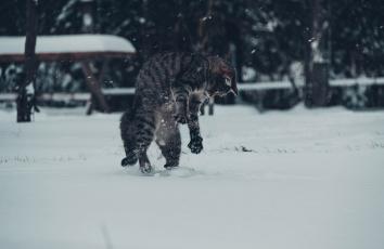 Картинка животные коты зима снег котяра кошак кот