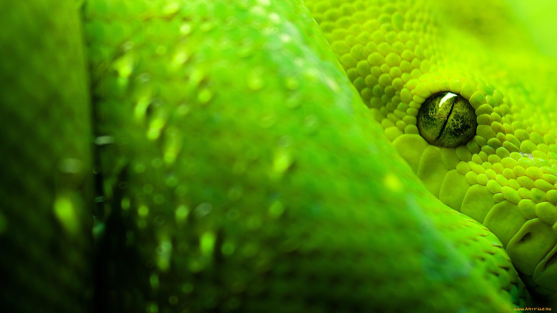 Змея на пальце онлайн