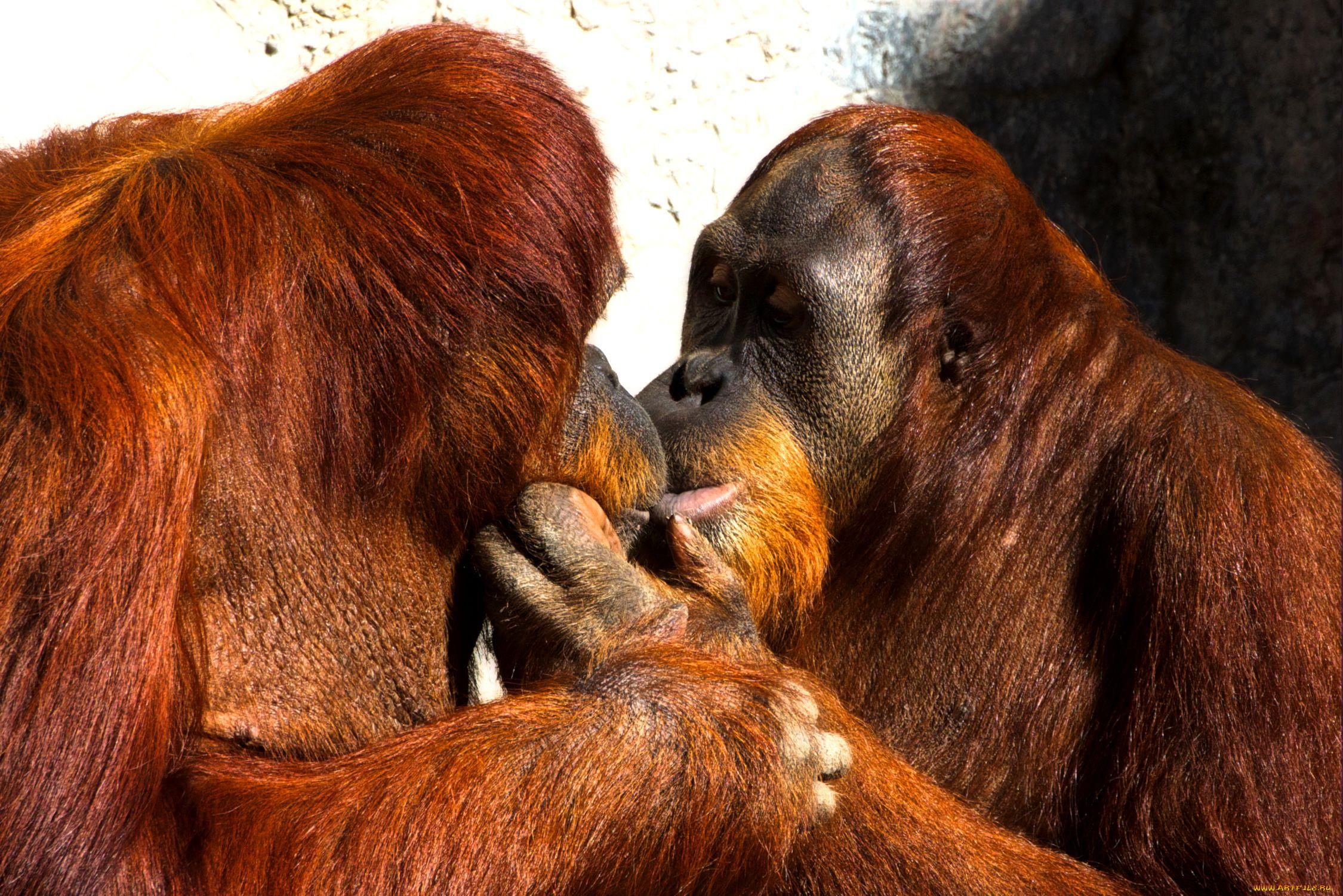 Смешной поцелуй картинки