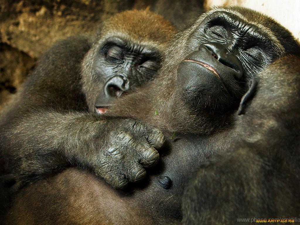 Прикольные картинки с обезьянами с добрым утром с надписью