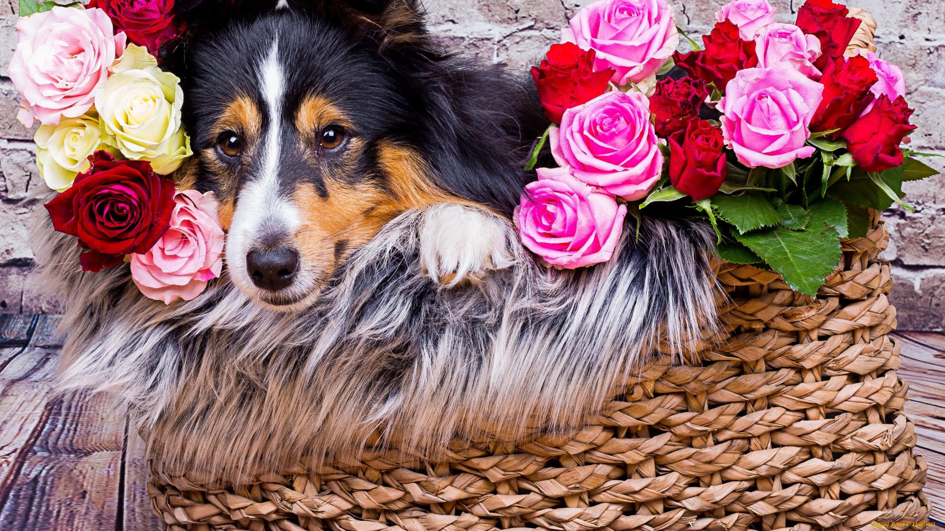 Красивые открытки цветы животные