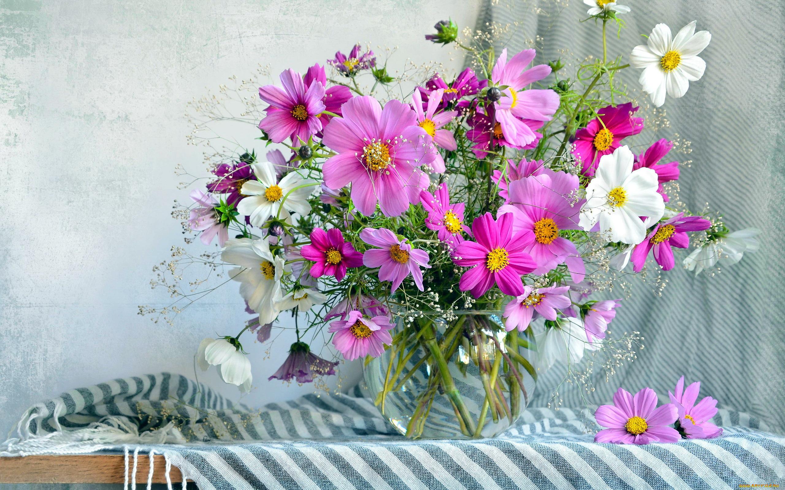 Цветок космея букеты фото, конфетами магазин