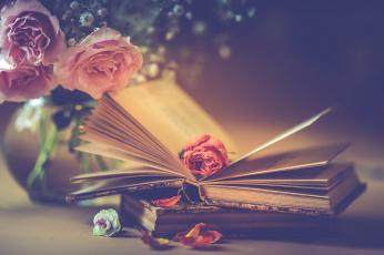 обоя разное, канцелярия,  книги, розы, букет, лепестки, книги, стиль, цветы, бутон