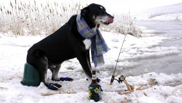 обоя юмор и приколы, бутылка, шарф, удочка, собака, рыбалка, зимняя