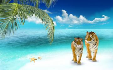обоя животные, тигры, пальма, тигр, звезда, море