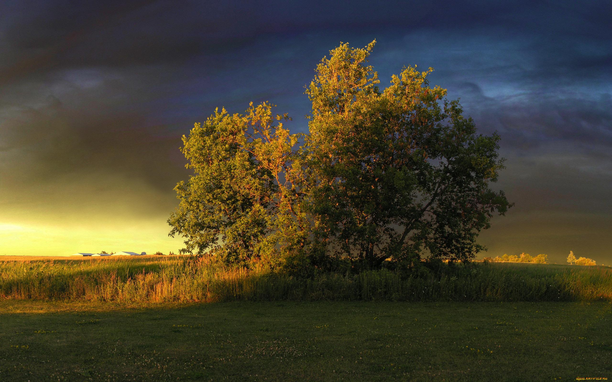 дерево поле небо закат без смс
