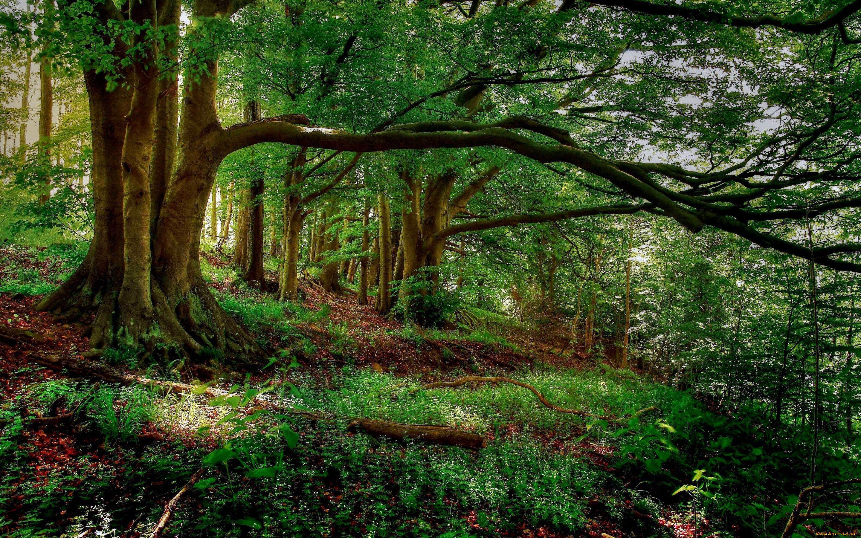 природа деревья графика лес nature trees graphics forest загрузить