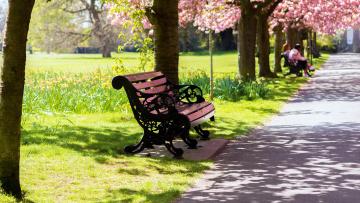 Картинка природа парк скамейка аллея деревья