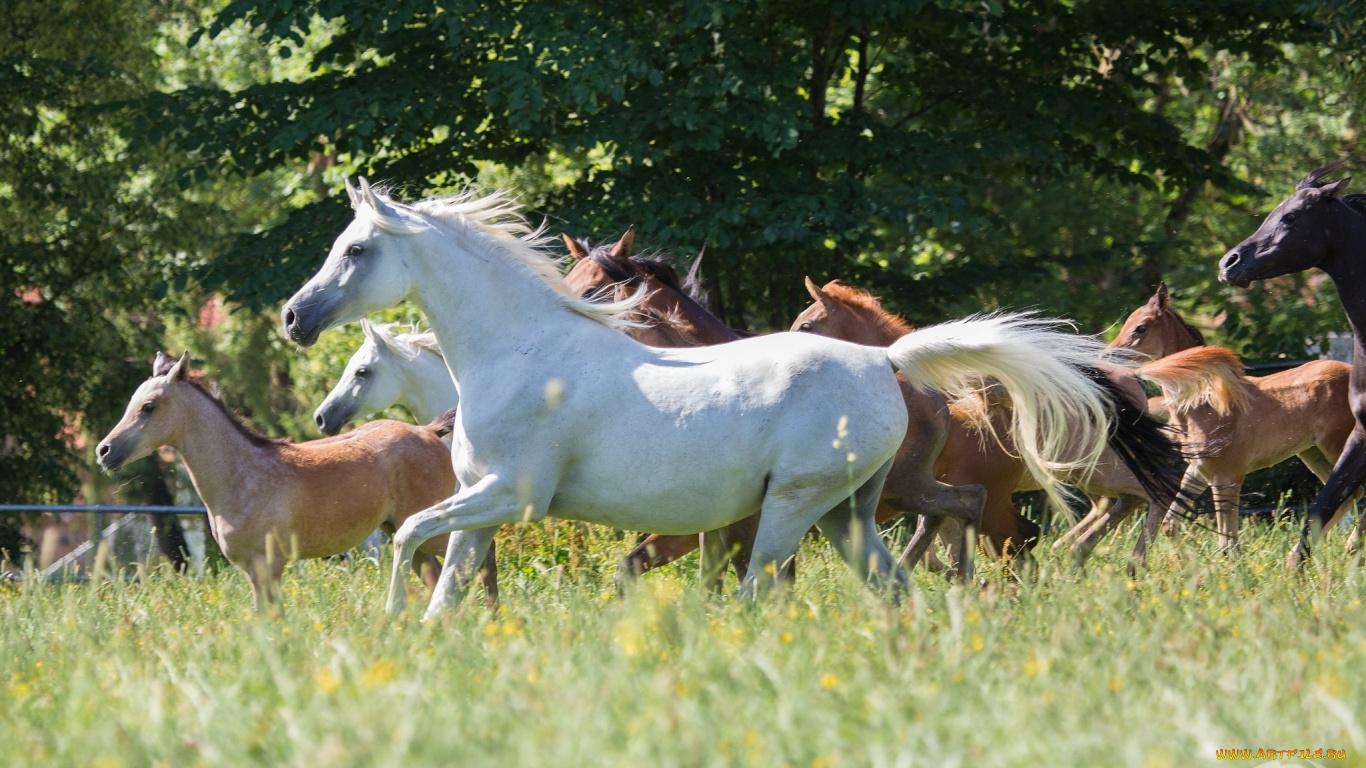 обои для рабочего стола лошади 1366x768 № 447525  скачать